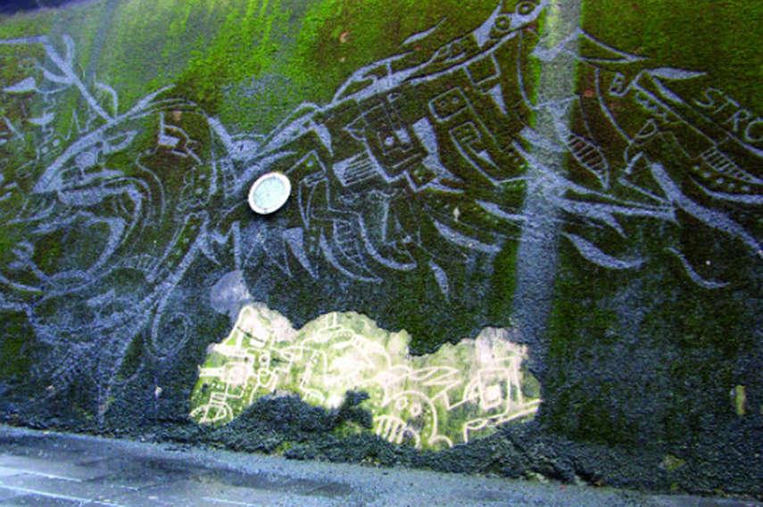 Stefaan-De-Croock-aka-Strook-Reverse-moss-graffiti