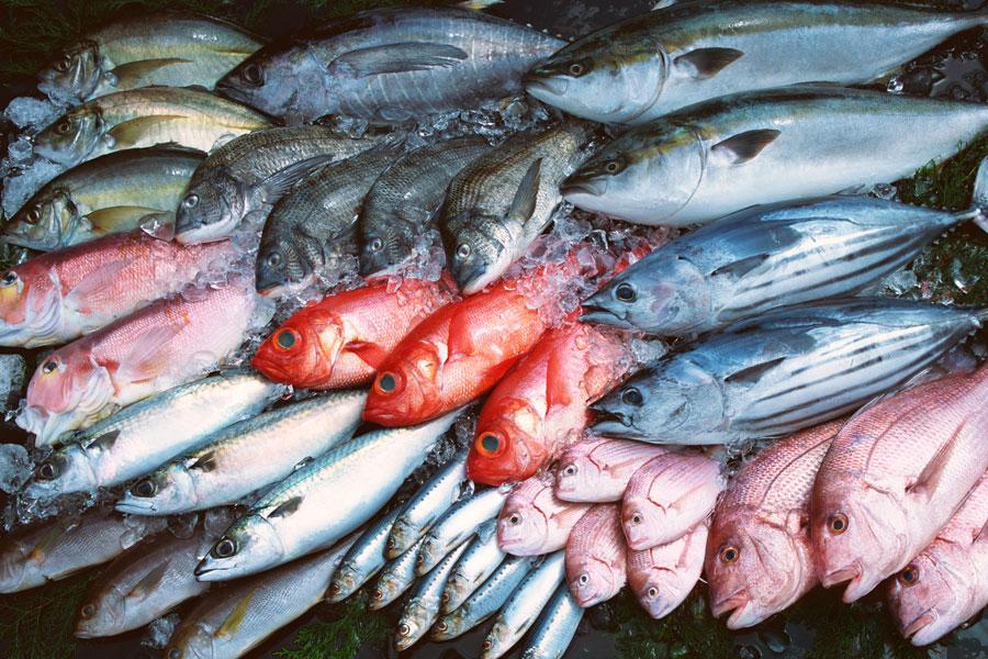 04929g-clasifican-pescados