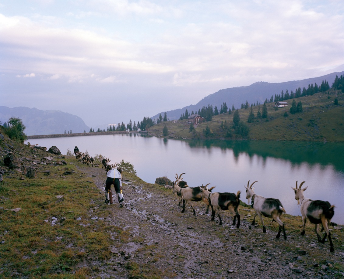 Goat Project 054